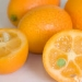 Kumquat or the gold gems of the citrus family