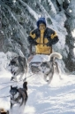 snow_dogs_picture.jpg