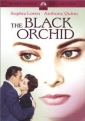 the_black_orchid_photo.jpg
