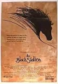 the_black_stallion_image.jpg