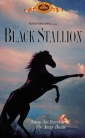 the_black_stallion_image1.jpg