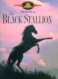 the_black_stallion_photo1.jpg
