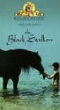 the_black_stallion_picture1.jpg
