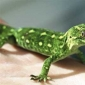 7 Care Tips for Gecko