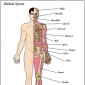 Basics of human bones