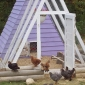 Build Your Own Chicken Coop Today