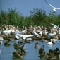 Ecological Disaster in the Danube Delta