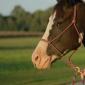 Horse Training Equipment