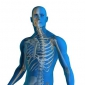 How does the body repair damaged tissues and cells?