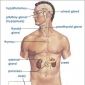 Introduction to hormones and endocrine glands