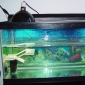 Turtle Aquariums