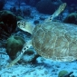 Turtles Race To Extinction