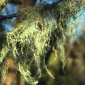 What are lichens?