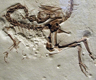 What can we learn from the fossil record?