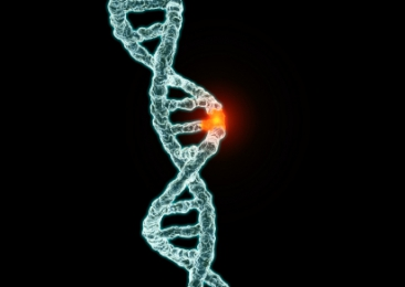What is a mutation?