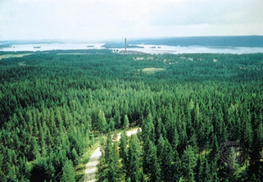 What lives in conifer forests?