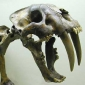 What were sabre-toothed cats?