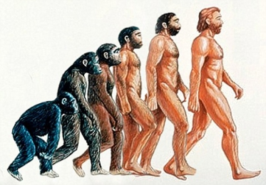 Where did humans probably evolve?