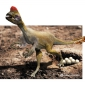 Which dinosaur had a head like a parrot?