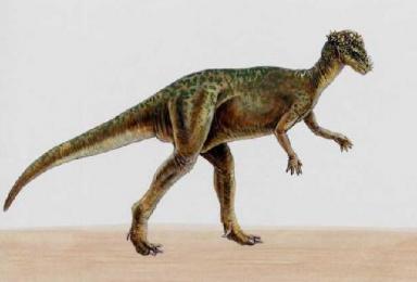 Which dinosaur was bone-headed?