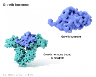 Which hormone affects growth?