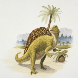 Which plant and meat-eating dinosaurs had a crest all the way down their backs?