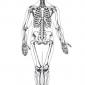 Why do I need a skeleton?