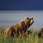 Wildlife across the Globe