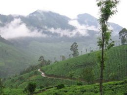 Holidaying in God's own country, Kerala